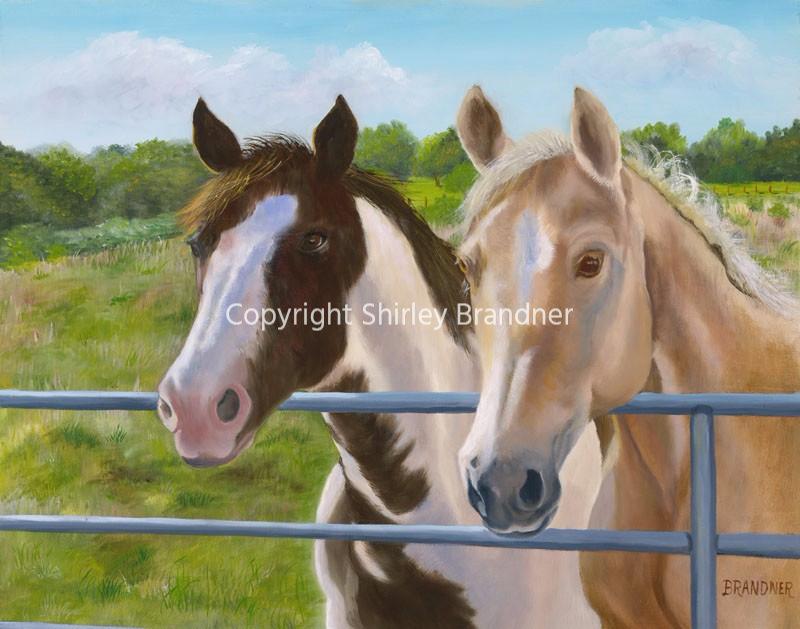 Texas Horses